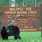 Superior National Forest Managers Urge Visitors to be Bear Aware