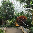 Thunder Bay's Centennial Conservatory will reopen