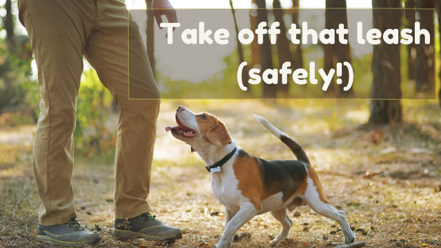 Take That Leash Off! Safely
