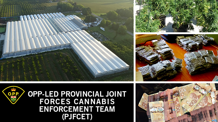 OPP PROVINCIAL ENFORCEMENT TEAM TACKLES  ILLEGAL CANNABIS MARKET