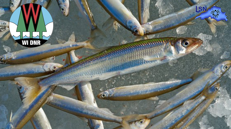 New Smelt Consumption Advisory for Lake Superior