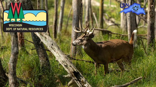 DNR Confirms CWD In Wood County Wild Deer