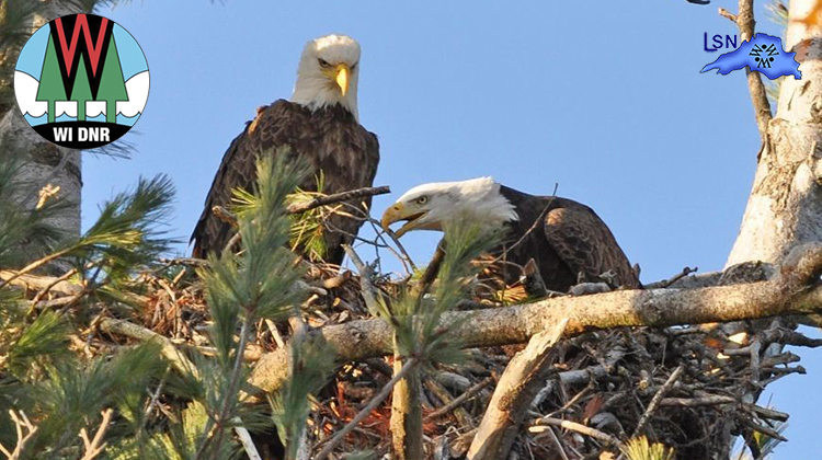 Eagle-Eyed Wisconsinites Report Dozens Of New Bald Eagle Nests