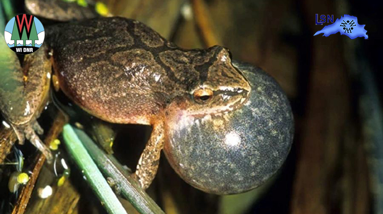 Volunteers Needed For Frog Call Surveys