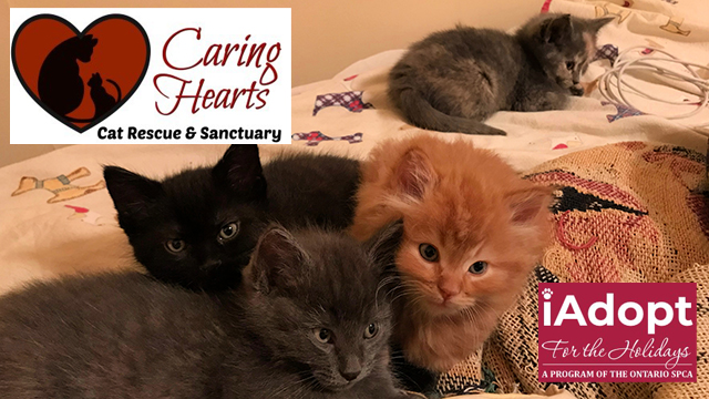 CARING HEARTS CAT RESCUE AND SANCTUARY kicks off