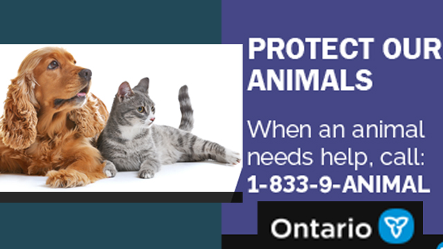 New Animal Welfare System Now In Force In Ontario