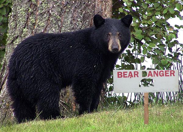 Women Killed by Black Bear