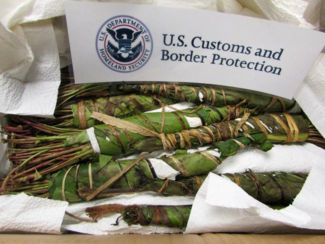 CBP Seizes 69 Pounds of Khat  Lake Superior News