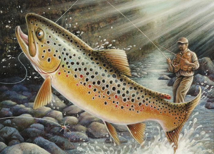 Stillwater artist wins trout  and salmon stamp contest  Lake Superior News