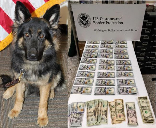 Dulles CBP Second Currency K9 Hit in as Many Days ~ Lake Superior News