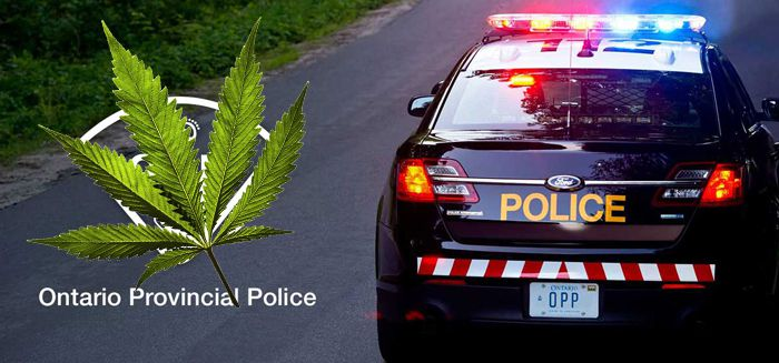 OPP Raid Cannabis Store Kenora  Lake Superior News