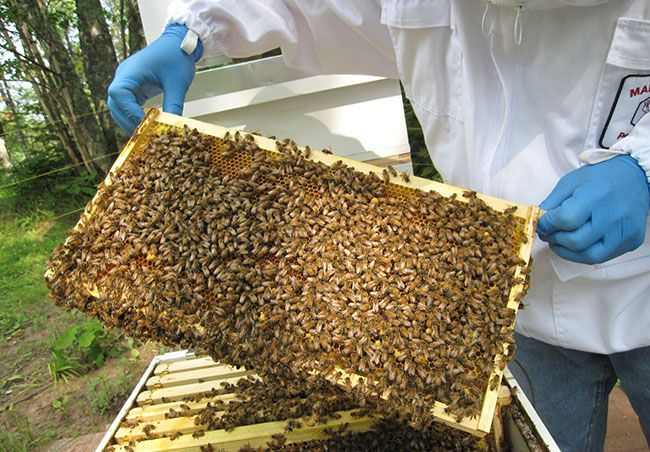 UW-Superior holding free beekeeping workshops  Lake Superior News
