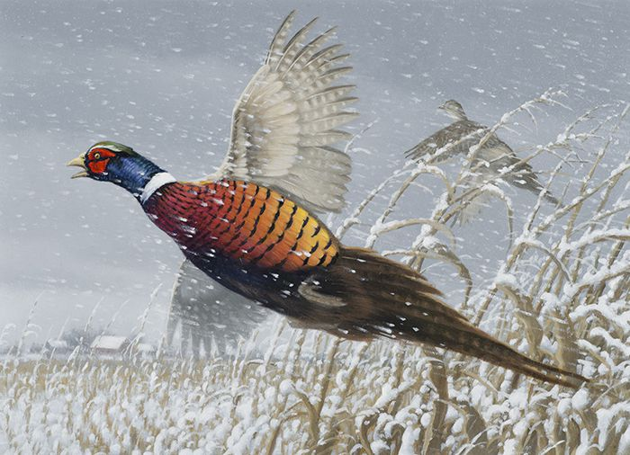 Michael Sieve pheasant  habitat stamp DNR Lake Superior News