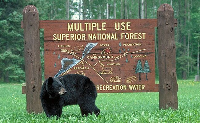 bear_at_kawishiwi_sign Lake Superior National Forest   Lake Superior News