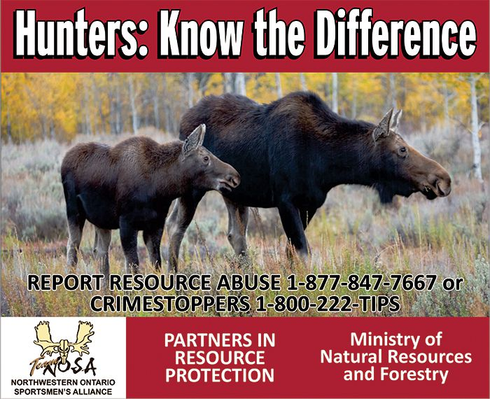 OSA Billboard Project Encourages Moose Conservation   Lake Superior News